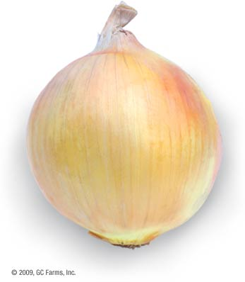 Onion_yellow