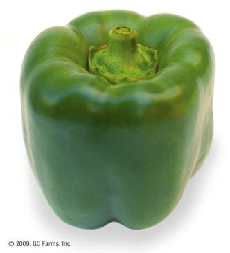 Pepper_bell_green